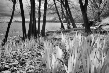 Ostseeküste im Naturschutzgebiet bei Bockholm © Holger Rüdel