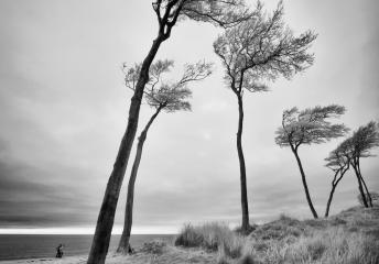 Darßwald an der Westküste © Holger Rüdel