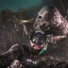 Seal story © Robert Marc Lehmann