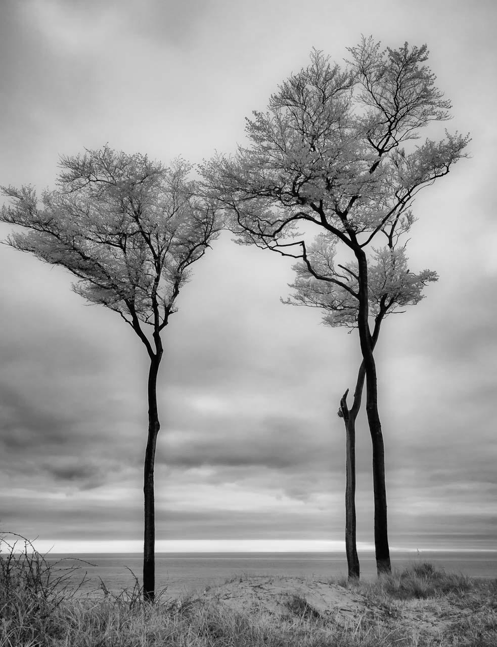 Drei markante Bäume an der Darß-Westküste © Holger Rüdel
