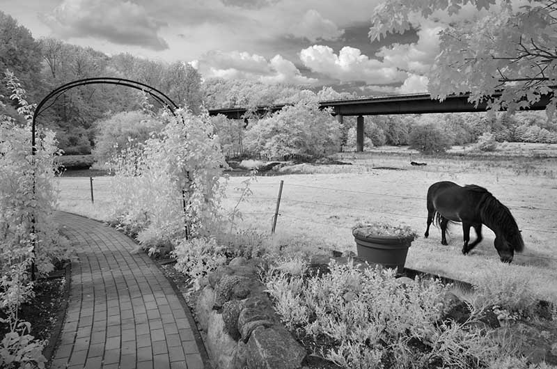 Digitale Infrarotfotografie mit Nikon-Kameras in der Praxis
